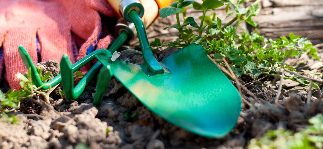 Sustainable Gardening In February