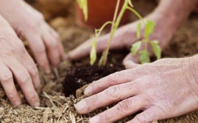 Ecobuz & Sustainability