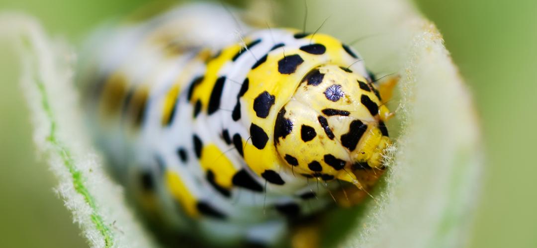 Biologicals in edible gardens | Episode 2 | Bio-pesticides in your garden