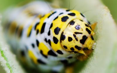 Biologicals in edible gardens   Episode 2   Bio-pesticides in your garden