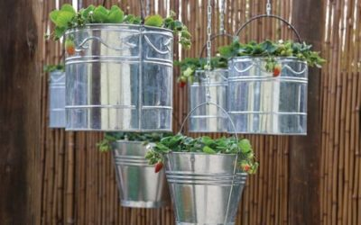 Sustainable Gardening in June