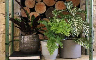 Sustainable Gardening in July