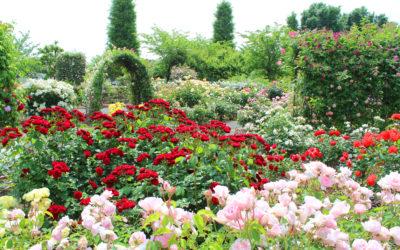 Biological Rose Care.